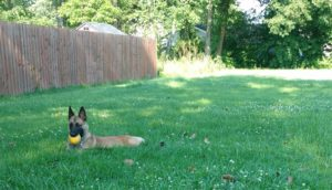 """Fluency in Training: Your dog doesn't know """"sit"""""""