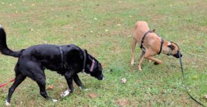 Nature Trails: the best dog training