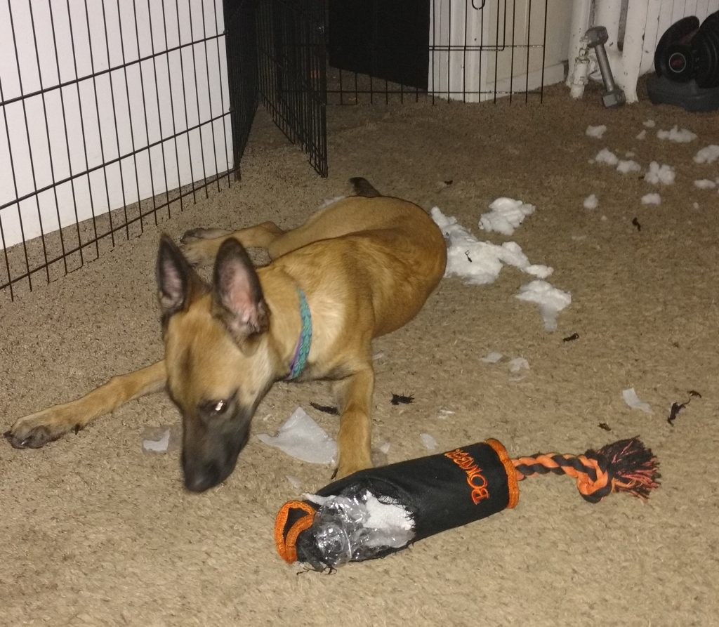 Puppy shredded toy