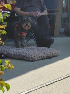 Is using treats in dog training bribery?